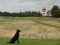 Dexter on the 18th tee