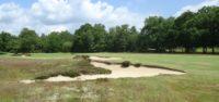 liphook golf club, tom simpson, poa annua, finegolf, finest courses,
